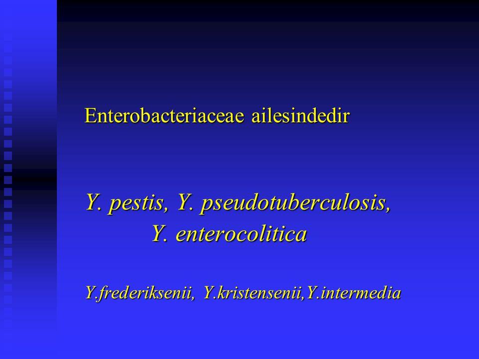 Enterobacteriaceae ailesindedir Y. pestis, Y. pseudotuberculosis, Y. enterocolitica Y. enterocolitica Y.frederiksenii, Y.kristensenii,Y.intermedia