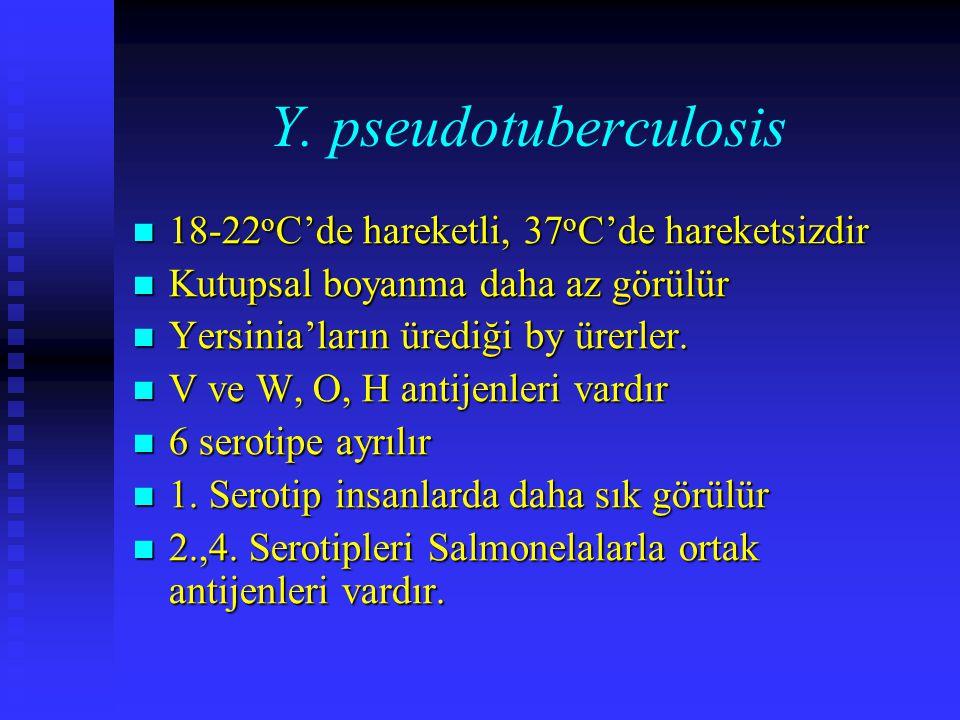 Y. pseudotuberculosis 18-22 o C'de hareketli, 37 o C'de hareketsizdir 18-22 o C'de hareketli, 37 o C'de hareketsizdir Kutupsal boyanma daha az görülür