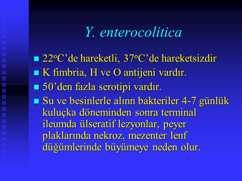 Y. enterocolitica 22 o C'de hareketli, 37 o C'de hareketsizdir 22 o C'de hareketli, 37 o C'de hareketsizdir K fimbria, H ve O antijeni vardır. K fimbr