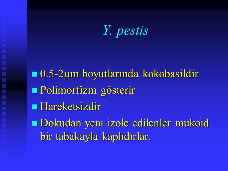 Y. pestis 0.5-2  m boyutlarında kokobasildir 0.5-2  m boyutlarında kokobasildir Polimorfizm gösterir Polimorfizm gösterir Hareketsizdir Hareketsizdi