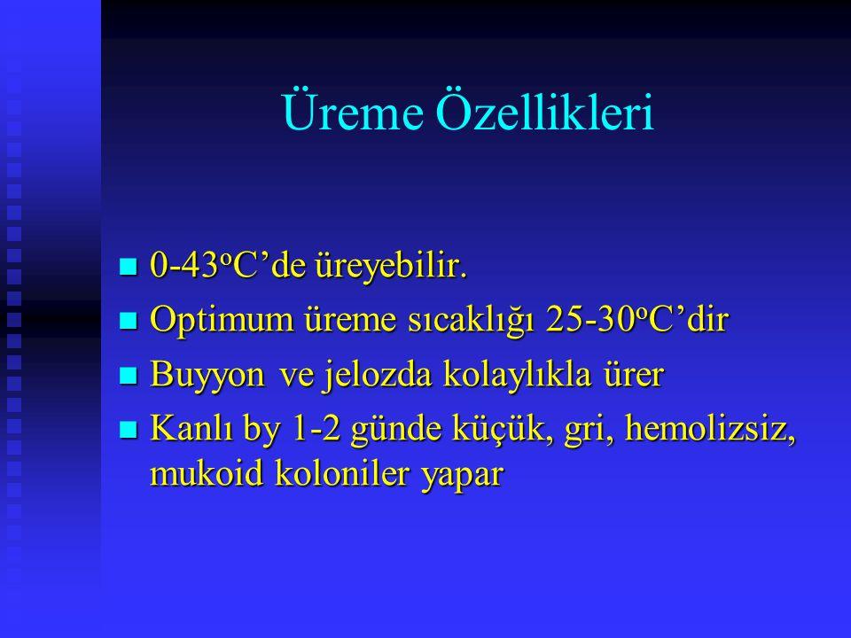 Üreme Özellikleri 0-43 o C'de üreyebilir. 0-43 o C'de üreyebilir. Optimum üreme sıcaklığı 25-30 o C'dir Optimum üreme sıcaklığı 25-30 o C'dir Buyyon v