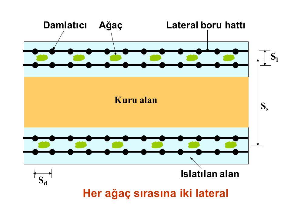Her ağaç sırasına iki lateral Kuru alan DamlatıcıAğaçLateral boru hattı SdSd SlSl Islatılan alan SsSs