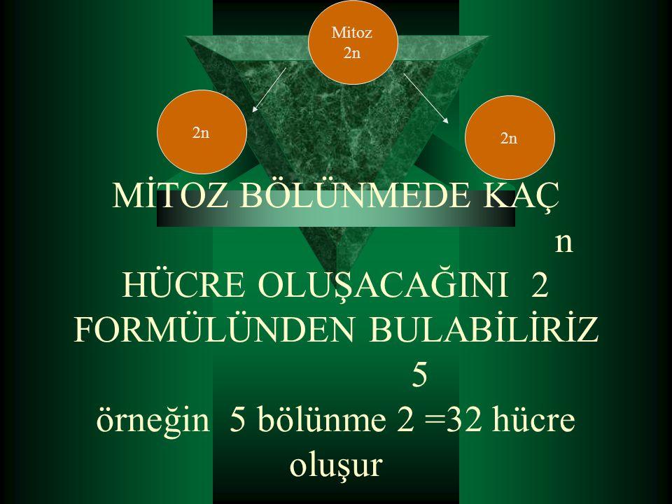 MİTOZ BÖLÜNMEDE KAÇ n HÜCRE OLUŞACAĞINI 2 FORMÜLÜNDEN BULABİLİRİZ 5 örneğin 5 bölünme 2 =32 hücre oluşur Mitoz 2n