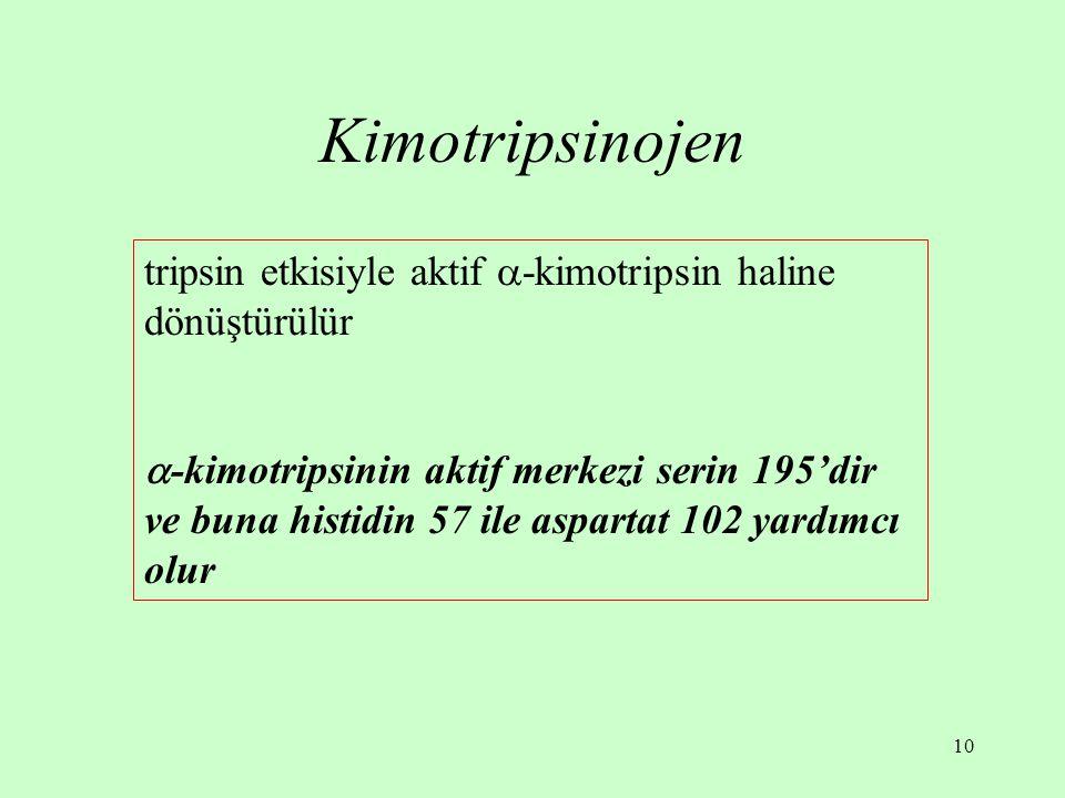 10 Kimotripsinojen tripsin etkisiyle aktif  -kimotripsin haline dönüştürülür  -kimotripsinin aktif merkezi serin 195'dir ve buna histidin 57 ile asp