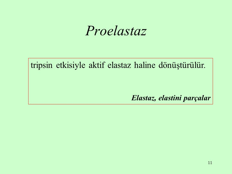 11 Proelastaz tripsin etkisiyle aktif elastaz haline dönüştürülür. Elastaz, elastini parçalar