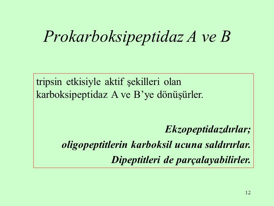 12 Prokarboksipeptidaz A ve B tripsin etkisiyle aktif şekilleri olan karboksipeptidaz A ve B'ye dönüşürler. Ekzopeptidazdırlar; oligopeptitlerin karbo
