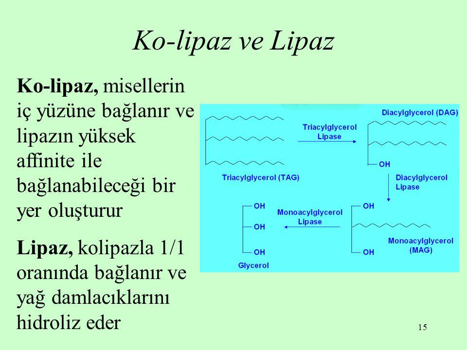 15 Ko-lipaz ve Lipaz Ko-lipaz, misellerin iç yüzüne bağlanır ve lipazın yüksek affinite ile bağlanabileceği bir yer oluşturur Lipaz, kolipazla 1/1 ora