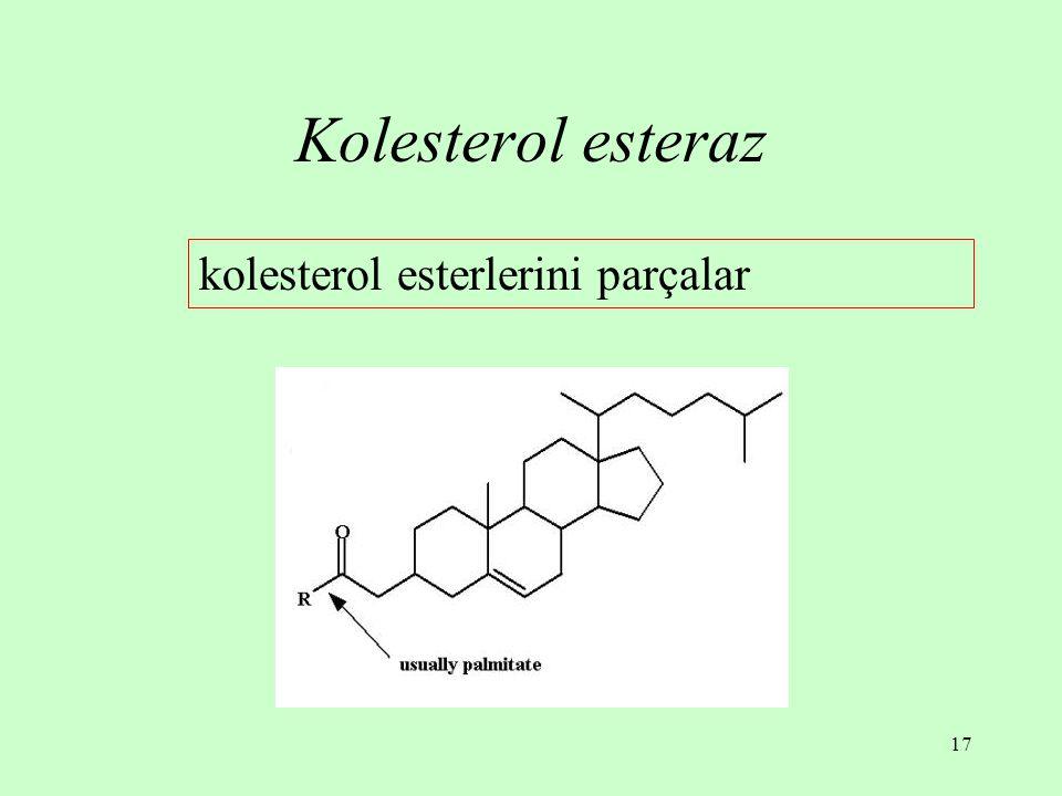 17 Kolesterol esteraz kolesterol esterlerini parçalar