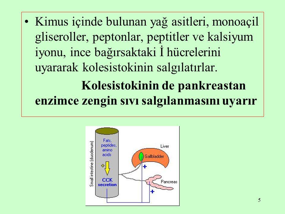 5 Kimus içinde bulunan yağ asitleri, monoaçil gliseroller, peptonlar, peptitler ve kalsiyum iyonu, ince bağırsaktaki İ hücrelerini uyararak kolesistok