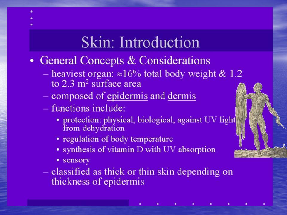 Derinin fonksiyonları 1.Koruma: Isıya (sıcak-soğuk), su kaybına, UV'ye, kimyasal maddelere, MO'lara ve minör travmalara karşı 2.Duyu: Sıcak, soğuk, dokunma, ağrı 3.Termoregülasyon: Terleme, vazodilatasyon, vazokonsrüksiyon 4.İmmünolojik defans: Langerhans hücreleri aracılığıyla 5.Vitamin-D sentezi 6.Yara iyileşmesi: Reepitelizasyon, dermal tamir 7.Detoksifikasyon: Terleme 8.Ruhsal durumun ifadesi, estetik 9.Genel sağlığın yansıtılması