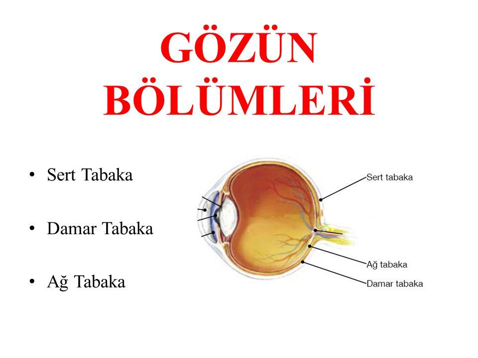 SERT TABAKA Gözün en dış kısmındaki gözü dıştan saran, gözü dış etkilerden koruyan beyaz renkli koruyucu tabakadır.