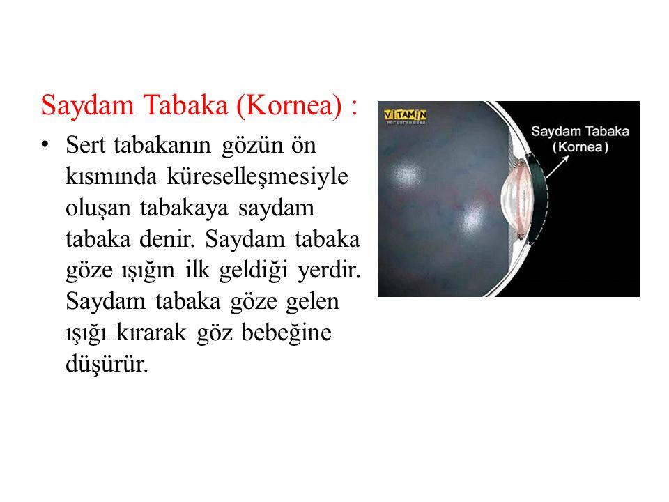 1)Gözün bölümleri nelerdir.2)Sert tabaka nedir. 3)Gözün yardımcı bölümleri nelerdir.