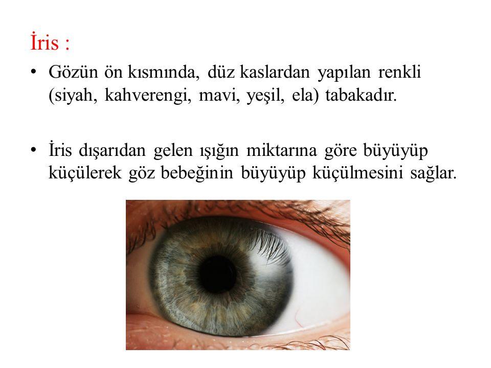 İris : Gözün ön kısmında, düz kaslardan yapılan renkli (siyah, kahverengi, mavi, yeşil, ela) tabakadır. İris dışarıdan gelen ışığın miktarına göre büy