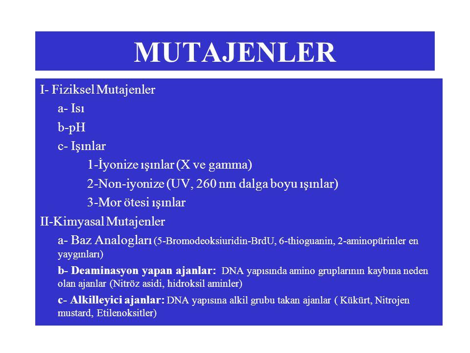 MUTAJENLER I- Fiziksel Mutajenler a- Isı b-pH c- Işınlar 1-İyonize ışınlar (X ve gamma) 2-Non-iyonize (UV, 260 nm dalga boyu ışınlar) 3-Mor ötesi ışınlar II-Kimyasal Mutajenler a- Baz Analogları (5-Bromodeoksiuridin-BrdU, 6-thioguanin, 2-aminopürinler en yaygınları) b- Deaminasyon yapan ajanlar: DNA yapısında amino gruplarının kaybına neden olan ajanlar (Nitröz asidi, hidroksil aminler) c- Alkilleyici ajanlar: DNA yapısına alkil grubu takan ajanlar ( Kükürt, Nitrojen mustard, Etilenoksitler)