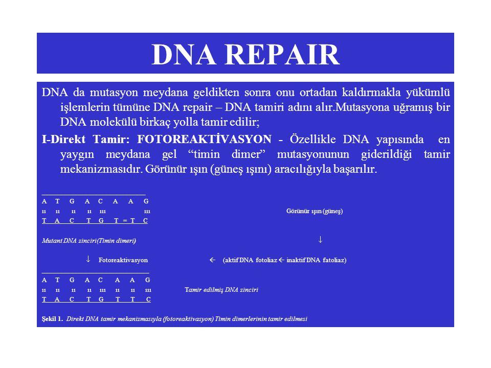 DNA REPAIR DNA da mutasyon meydana geldikten sonra onu ortadan kaldırmakla yükümlü işlemlerin tümüne DNA repair – DNA tamiri adını alır.Mutasyona uğramış bir DNA molekülü birkaç yolla tamir edilir; I-Direkt Tamir: FOTOREAKTİVASYON - Özellikle DNA yapısında en yaygın meydana gel timin dimer mutasyonunun giderildiği tamir mekanizmasıdır.