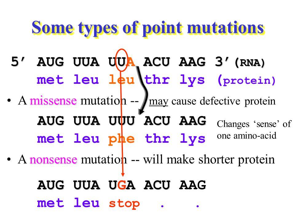 nonsenseA nonsense mutation -- will make shorter protein 5' AUG UUA UUA ACU AAG 3' ( RNA) met leu leu thr lys ( protein) missenseA missense mutation -- may cause defective protein AUG UUA UUU ACU AAG met leu phe thr lys Changes 'sense' of one amino-acid AUG UUA UGA ACU AUG UUA UGA ACU AAG met leu stop..