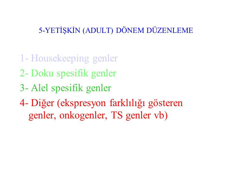 5-YETİŞKİN (ADULT) DÖNEM DÜZENLEME 1- Housekeeping genler 2- Doku spesifik genler 3- Alel spesifik genler 4- Diğer (ekspresyon farklılığı gösteren genler, onkogenler, TS genler vb)