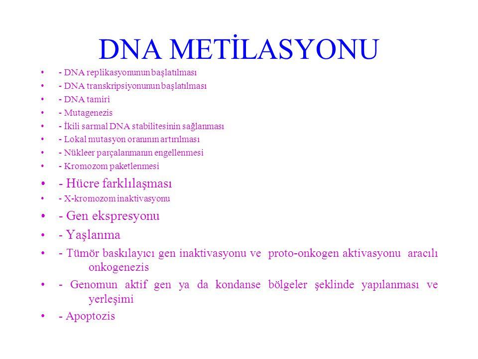 DNA METİLASYONU - DNA replikasyonunun başlatılması - DNA transkripsiyonunun başlatılması - DNA tamiri - Mutagenezis - İkili sarmal DNA stabilitesinin sağlanması - Lokal mutasyon oranının artırılması - Nükleer parçalanmanın engellenmesi - Kromozom paketlenmesi - Hücre farklılaşması - X-kromozom inaktivasyonu - Gen ekspresyonu - Yaşlanma - Tümör baskılayıcı gen inaktivasyonu ve proto-onkogen aktivasyonu aracılı onkogenezis - Genomun aktif gen ya da kondanse bölgeler şeklinde yapılanması ve yerleşimi - Apoptozis