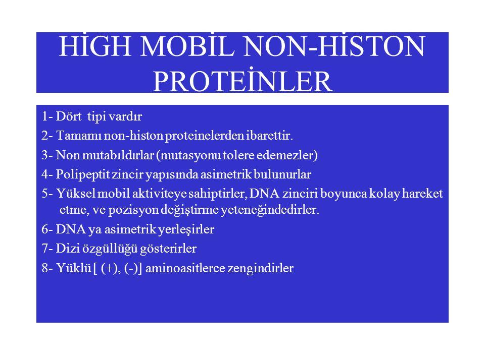 HİGH MOBİL NON-HİSTON PROTEİNLER 1- Dört tipi vardır 2- Tamamı non-histon proteinelerden ibarettir.