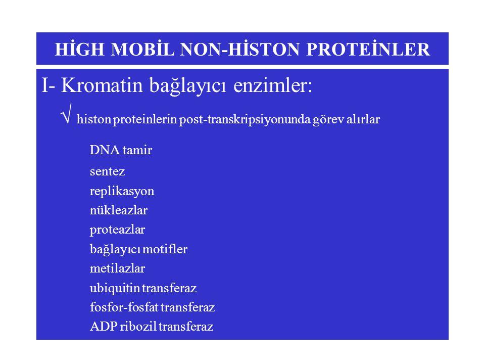HİGH MOBİL NON-HİSTON PROTEİNLER I- Kromatin bağlayıcı enzimler:  histon proteinlerin post-transkripsiyonunda görev alırlar DNA tamir sentez replikasyon nükleazlar proteazlar bağlayıcı motifler metilazlar ubiquitin transferaz fosfor-fosfat transferaz ADP ribozil transferaz
