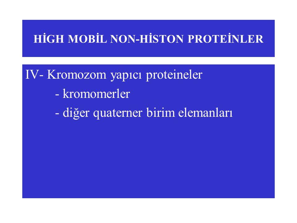 HİGH MOBİL NON-HİSTON PROTEİNLER IV- Kromozom yapıcı proteineler - kromomerler - diğer quaterner birim elemanları