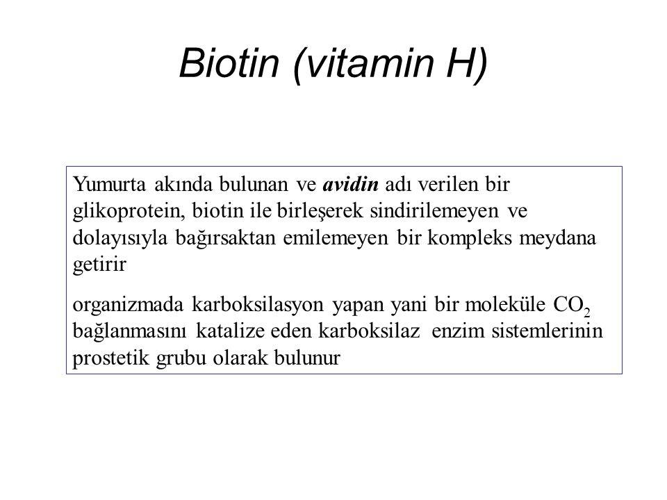 Biotin (vitamin H) Yumurta akında bulunan ve avidin adı verilen bir glikoprotein, biotin ile birleşerek sindirilemeyen ve dolayısıyla bağırsaktan emilemeyen bir kompleks meydana getirir organizmada karboksilasyon yapan yani bir moleküle CO 2 bağlanmasını katalize eden karboksilaz enzim sistemlerinin prostetik grubu olarak bulunur