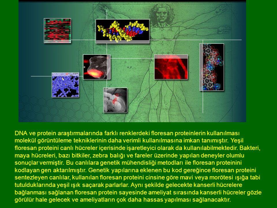 DNA ve protein araştırmalarında farklı renklerdeki floresan proteinlerin kullanılması molekül görüntüleme tekniklerinin daha verimli kullanılmasına imkan tanımıştır.