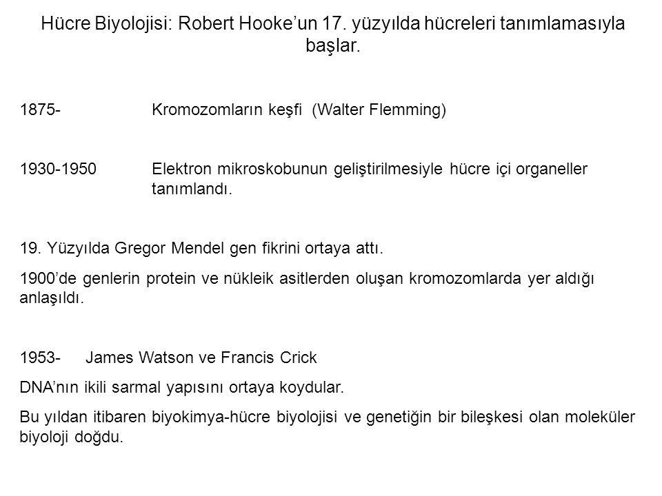 Hücre Biyolojisi: Robert Hooke'un 17.yüzyılda hücreleri tanımlamasıyla başlar.