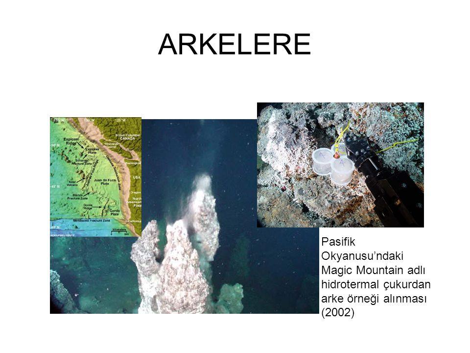 ARKELERE Pasifik Okyanusu'ndaki Magic Mountain adlı hidrotermal çukurdan arke örneği alınması (2002)