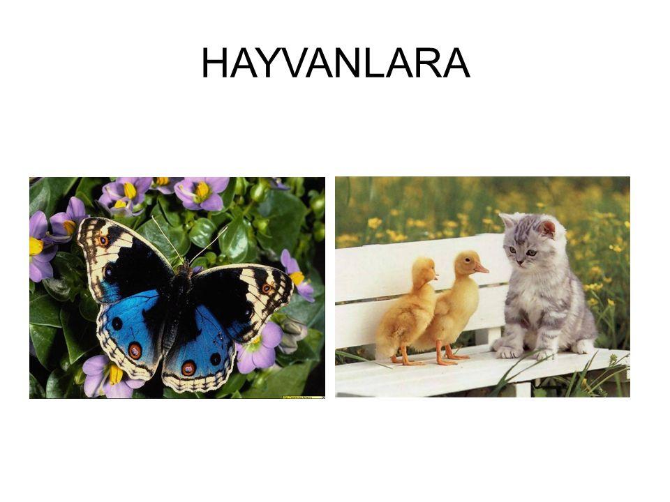 HAYVANLARA