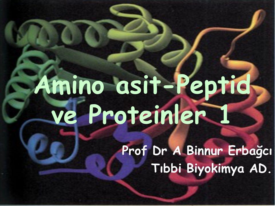 Proteinler amino asit polimerleridir Proteinler, canlı hücrelerde en fazla bulunan makromoleküller; yapı taşları olan amino asitlerin özgün kovalent bağlarla bağlanarak oluşturdukları zincirlerden meydana gelirler.