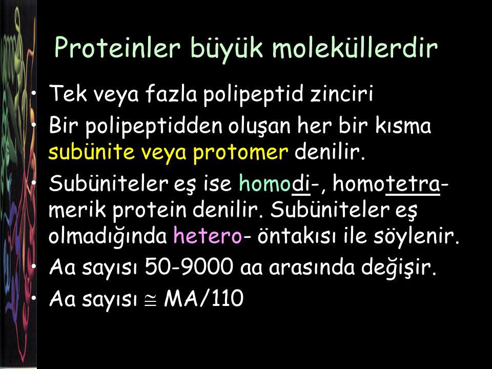 Proteinler büyük moleküllerdir Tek veya fazla polipeptid zinciri Bir polipeptidden oluşan her bir kısma subünite veya protomer denilir.