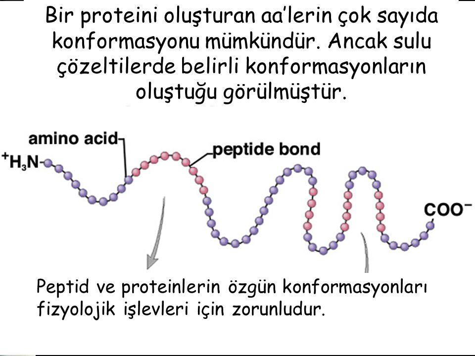 Bir proteini oluşturan aa'lerin çok sayıda konformasyonu mümkündür.