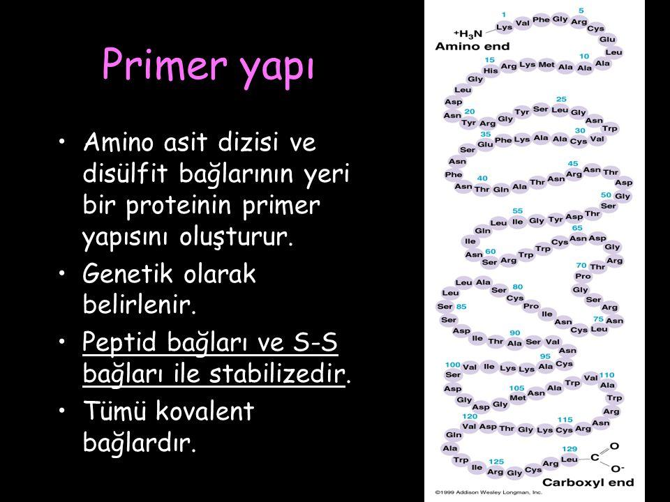 Primer yapı Amino asit dizisi ve disülfit bağlarının yeri bir proteinin primer yapısını oluşturur.