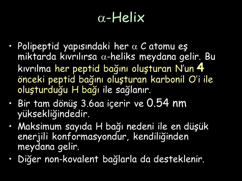  -Helix Polipeptid yapısındaki her  C atomu eş miktarda kıvrılırsa  -heliks meydana gelir.