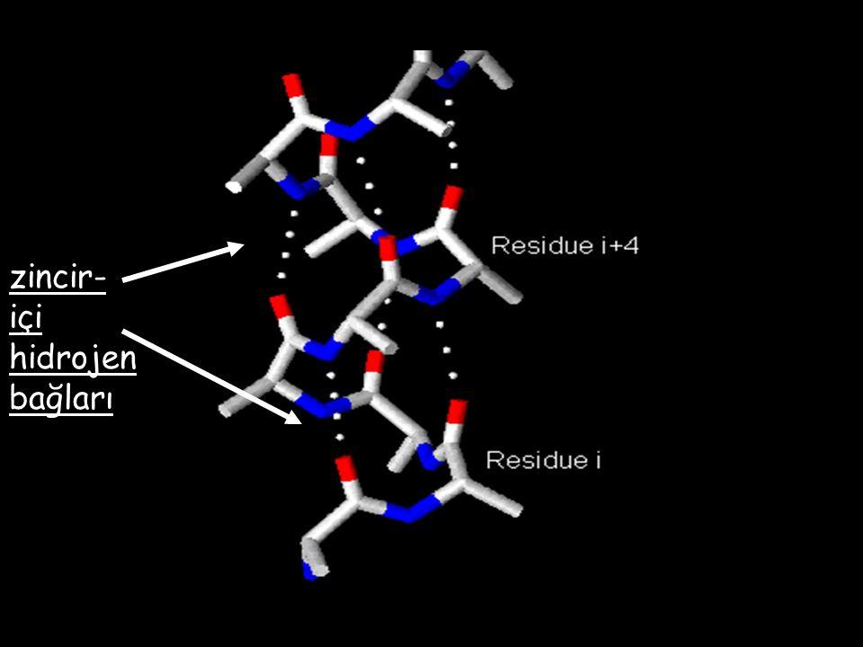 zincir- içi hidrojen bağları