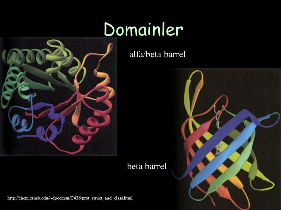 Domainler alfa/beta barrel http://chem.csusb.edu/~dpedersn/C436/prot_struct_and_class.html beta barrel