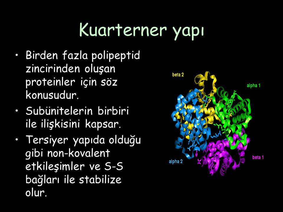 Kuarterner yapı Birden fazla polipeptid zincirinden oluşan proteinler için söz konusudur.