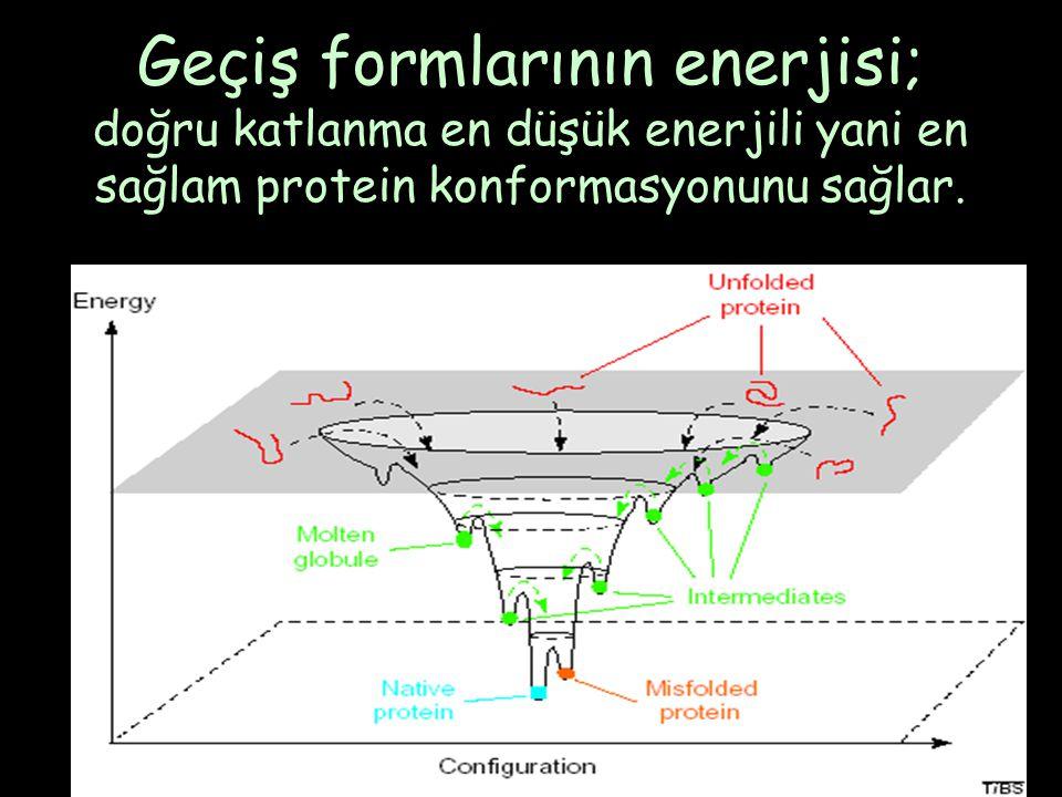 Geçiş formlarının enerjisi; doğru katlanma en düşük enerjili yani en sağlam protein konformasyonunu sağlar.