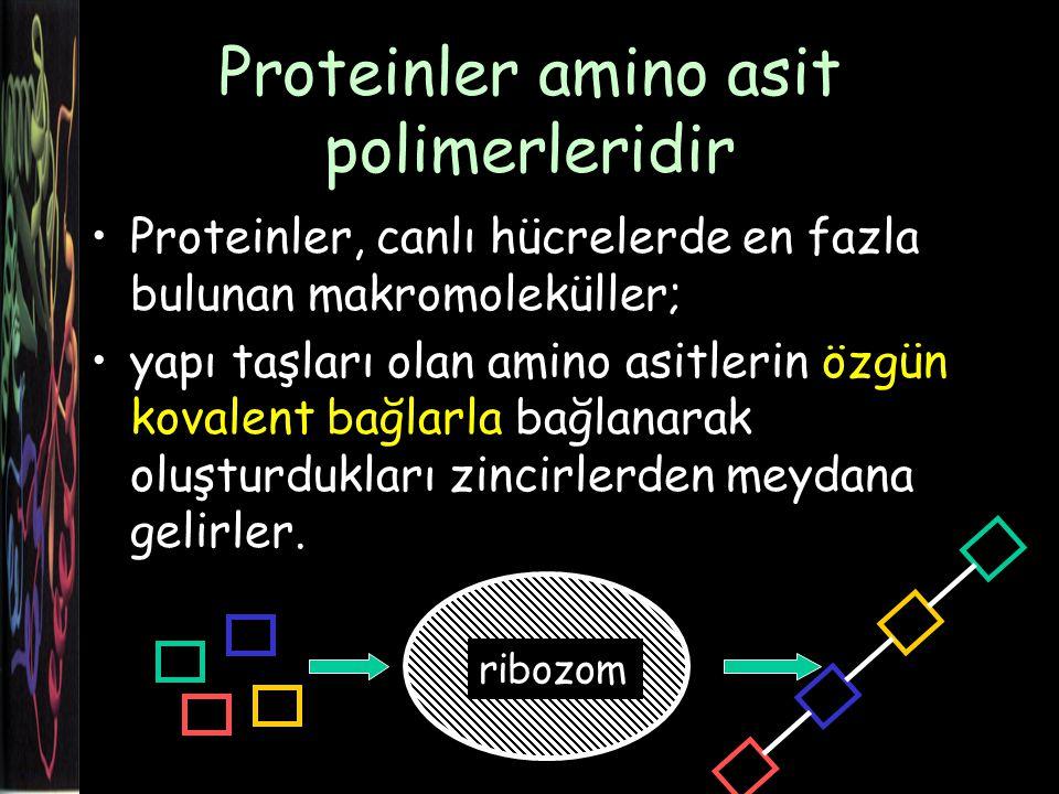 İmino asit Halkalı yapısı ve amino yerine imino grubu (sekonder amin) olan prolin bu grupta yer alır.