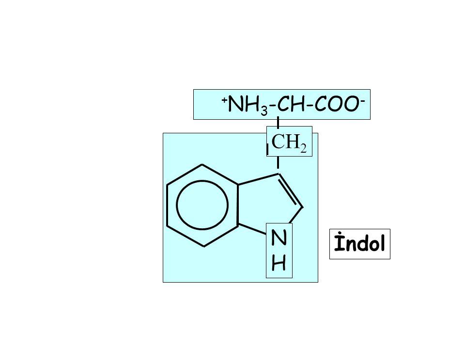NHNH + NH 3 -CH-COO - CH 2 İndol