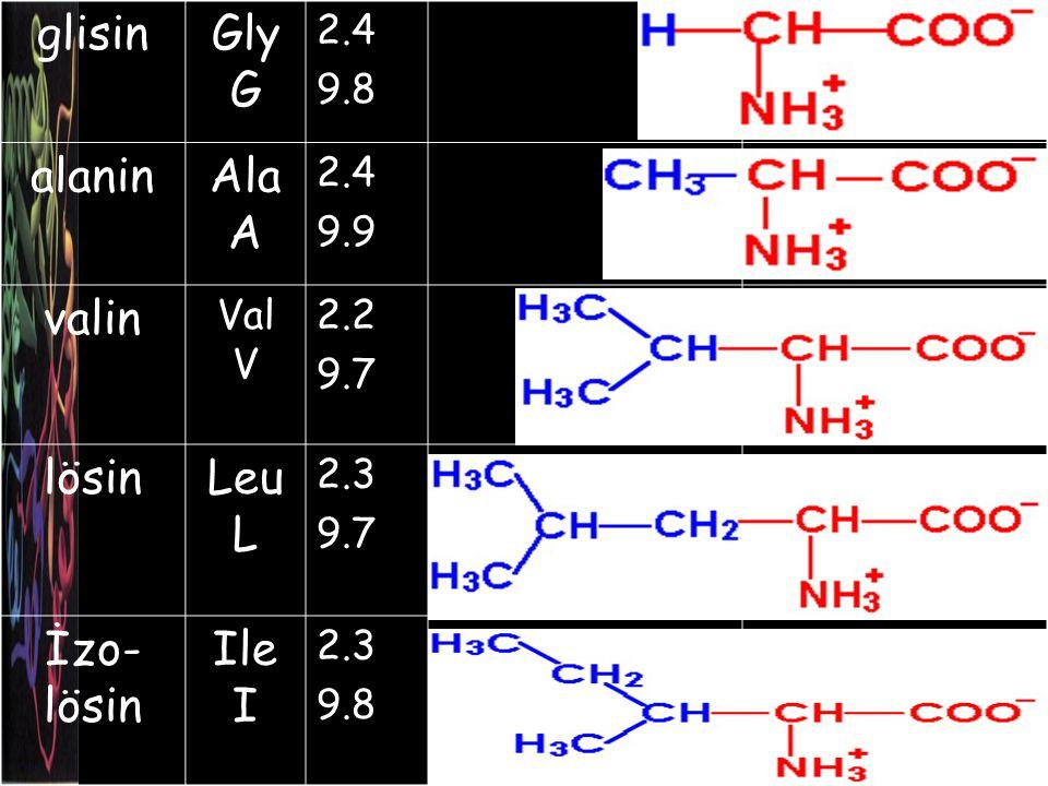 glisinGly G 2.4 9.8 alaninAla A 2.4 9.9 valin Val V 2.2 9.7 lösinLeu L 2.3 9.7 İzo- lösin Ile I 2.3 9.8