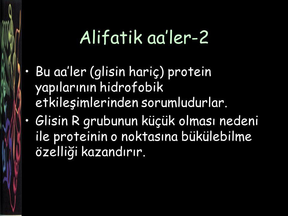 Alifatik aa'ler-2 Bu aa'ler (glisin hariç) protein yapılarının hidrofobik etkileşimlerinden sorumludurlar.