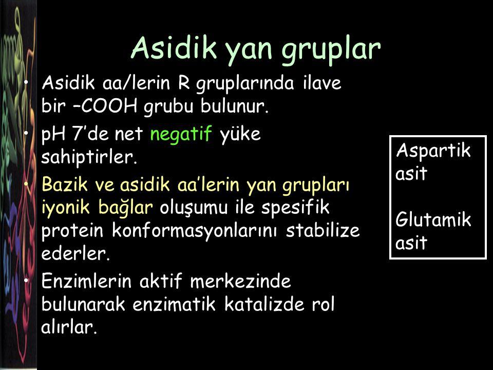 Asidik yan gruplar Asidik aa/lerin R gruplarında ilave bir –COOH grubu bulunur.