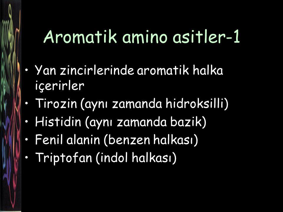 Aromatik amino asitler-1 Yan zincirlerinde aromatik halka içerirler Tirozin (aynı zamanda hidroksilli) Histidin (aynı zamanda bazik) Fenil alanin (benzen halkası) Triptofan (indol halkası)