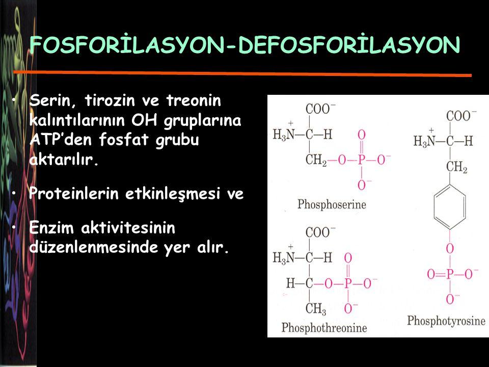 FOSFORİLASYON-DEFOSFORİLASYON Serin, tirozin ve treonin kalıntılarının OH gruplarına ATP'den fosfat grubu aktarılır.