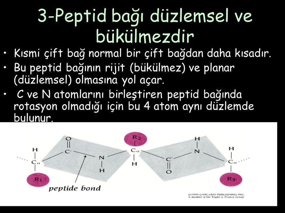 3-Peptid bağı düzlemsel ve bükülmezdir Kısmi çift bağ normal bir çift bağdan daha kısadır.