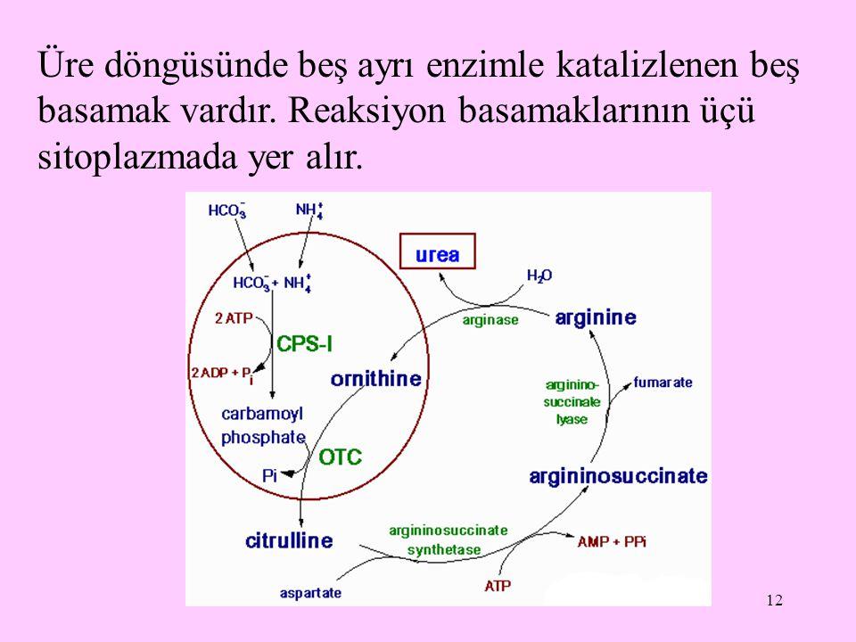 12 Üre döngüsünde beş ayrı enzimle katalizlenen beş basamak vardır. Reaksiyon basamaklarının üçü sitoplazmada yer alır.