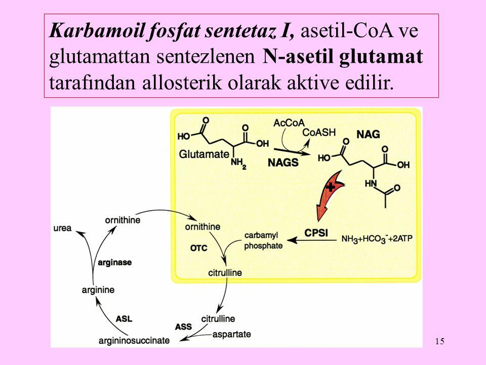 15 Karbamoil fosfat sentetaz I, asetil-CoA ve glutamattan sentezlenen N-asetil glutamat tarafından allosterik olarak aktive edilir.
