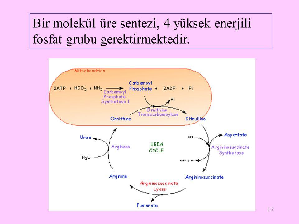 17 Bir molekül üre sentezi, 4 yüksek enerjili fosfat grubu gerektirmektedir.